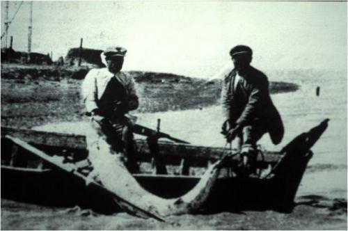 pesca-esturion.jpg